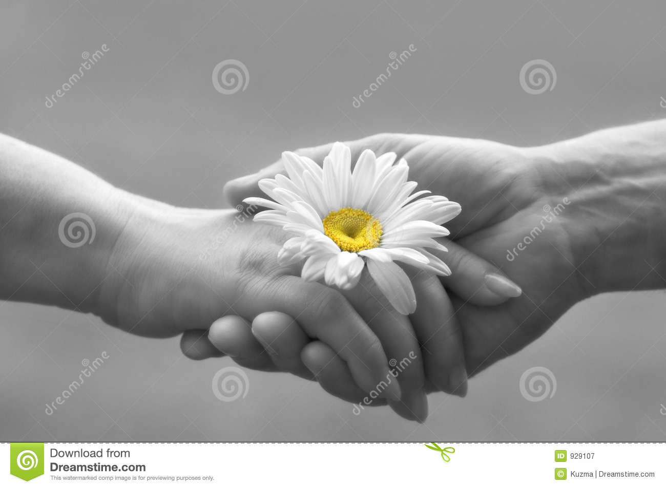 handshake with daisy focus on the flower special soft photo f x mr no ...