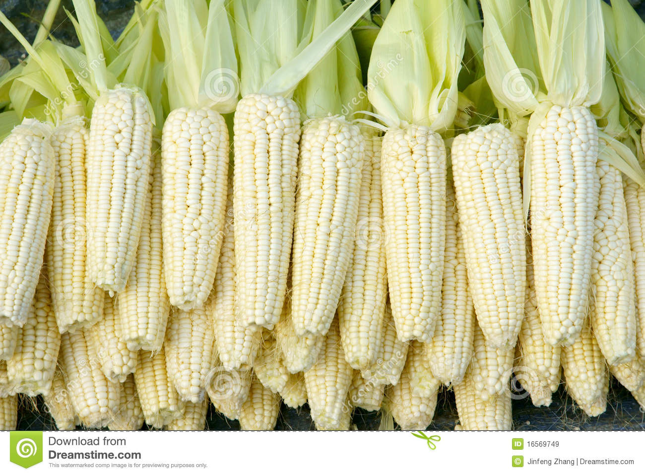 Maize stock photos download 44858 images tender maize cob many tender maize cobs are sold royalty free stock images voltagebd Image collections