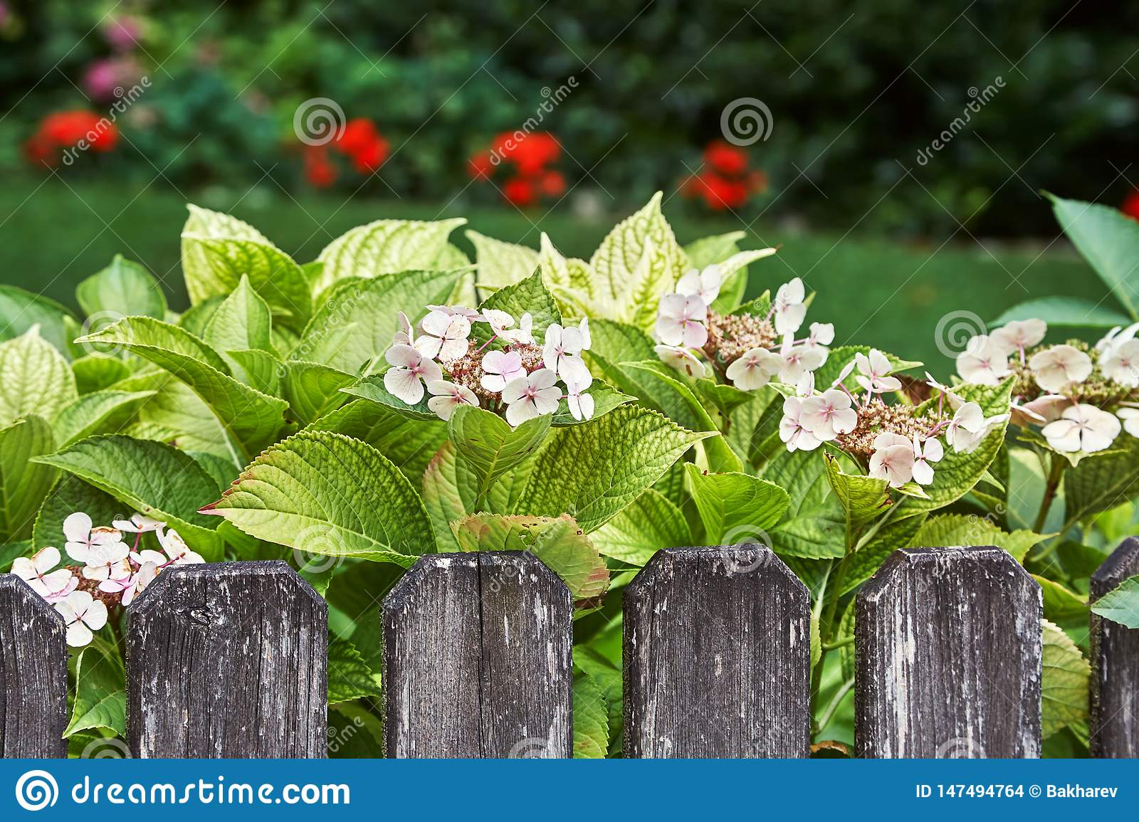Tender Small Flowers Decorating A Wooden Garden Fence Stock Photo