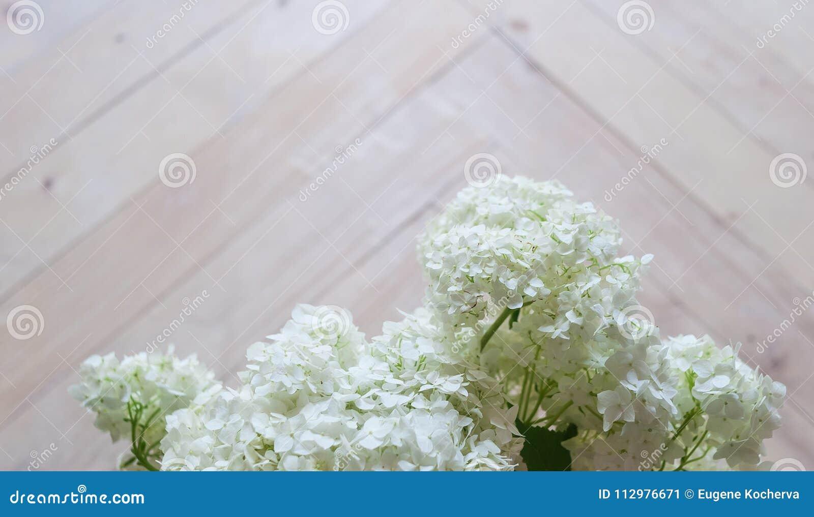 Tender white hydrangea on a wooden parquet.