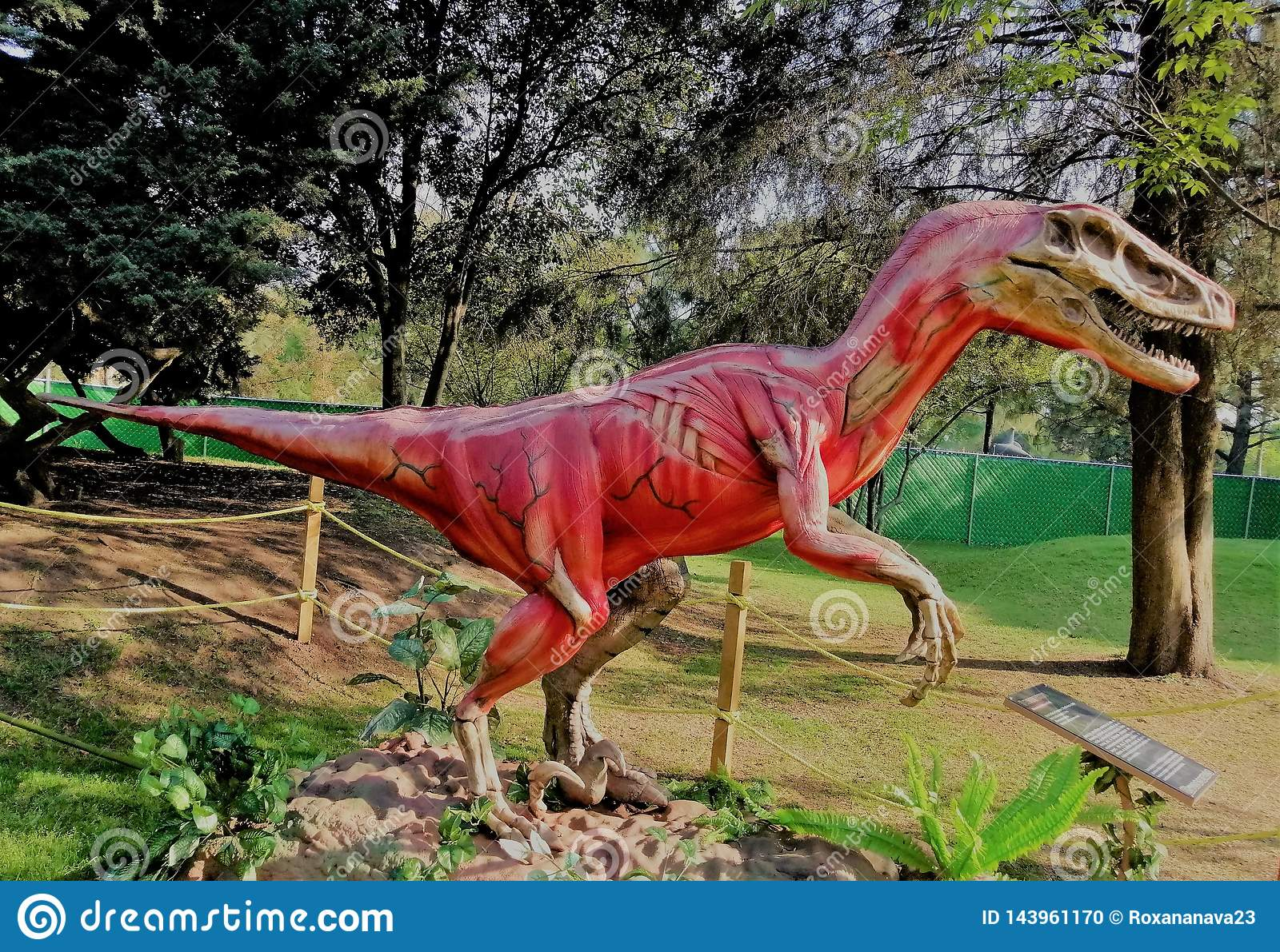 Tendons and muscles of dinosaur, he is fierce