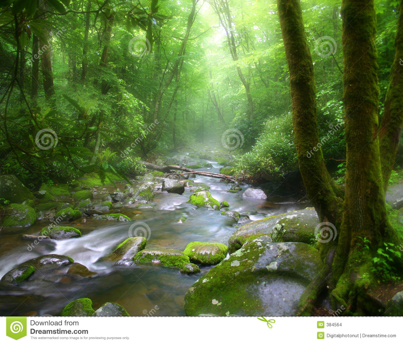Download Tennessee Misty Stream stock photo. Image of flowing, mountain - 384564