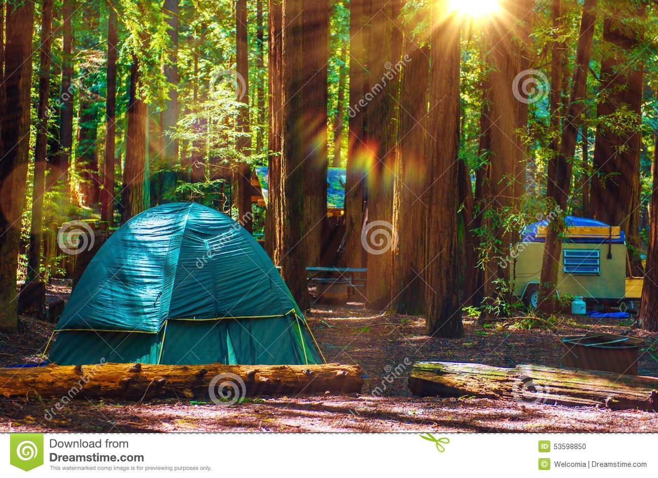 Tent Camping in Redwoods