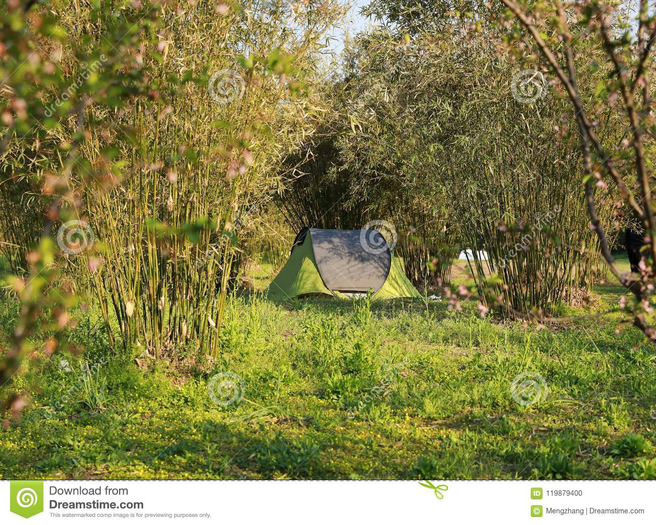 Tent in forests in summer sunny spring day family party picnic cozy easy balanced life