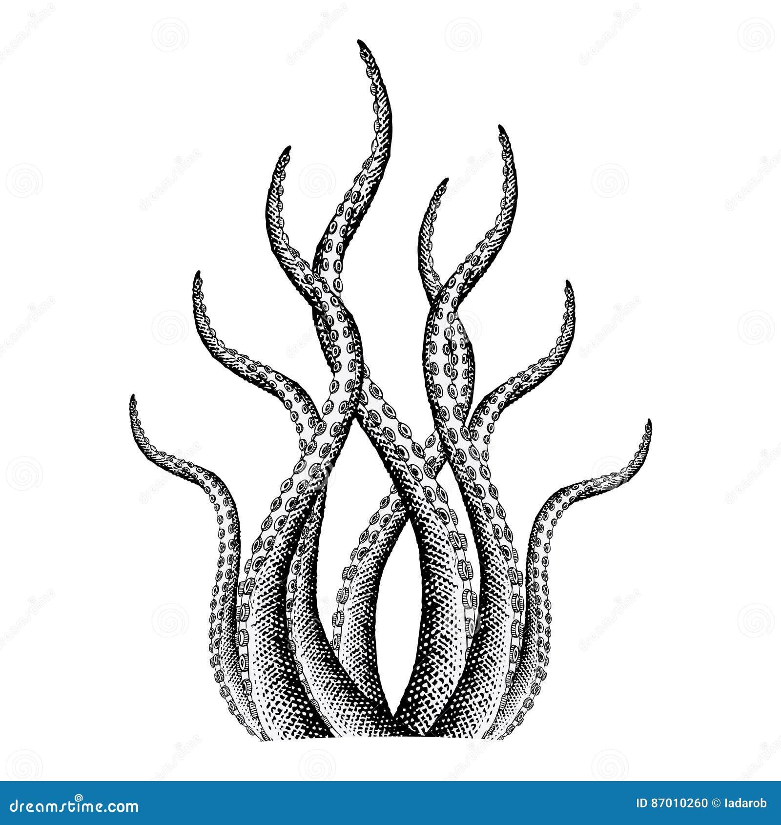 Vintage Kraken Illustration Tentacle Illustration ...