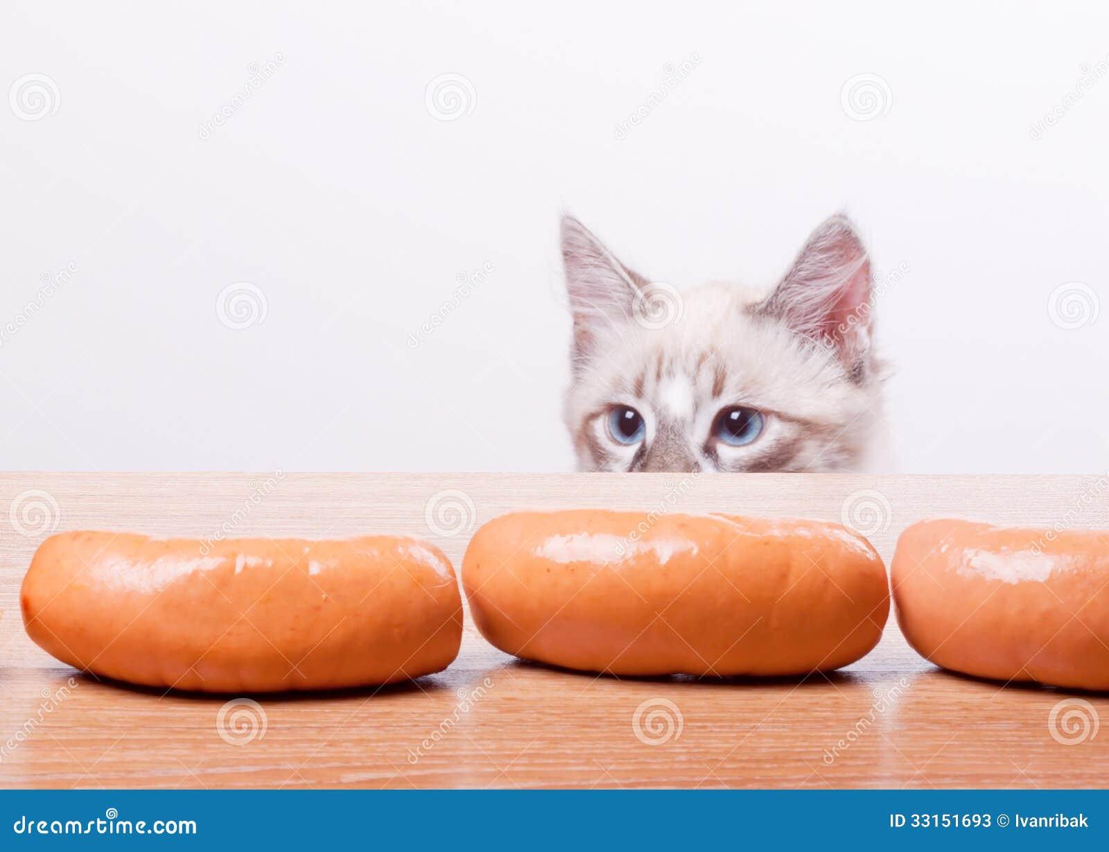 Tentativas do gato para roubar uma salsicha
