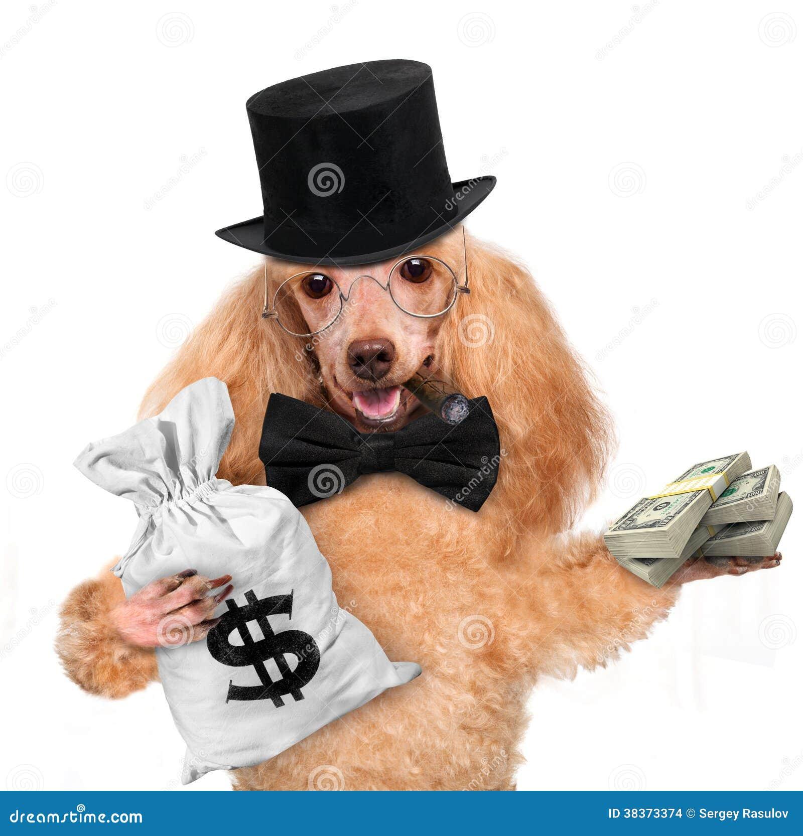 Tenuta del cane dei soldi
