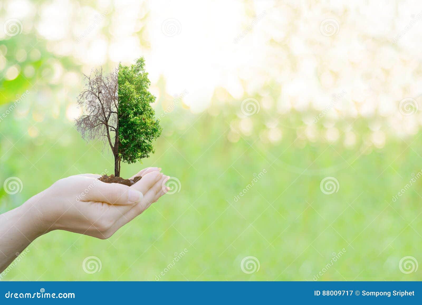 Tenuta umana delle mani di concetto di ecologia di doppia esposizione