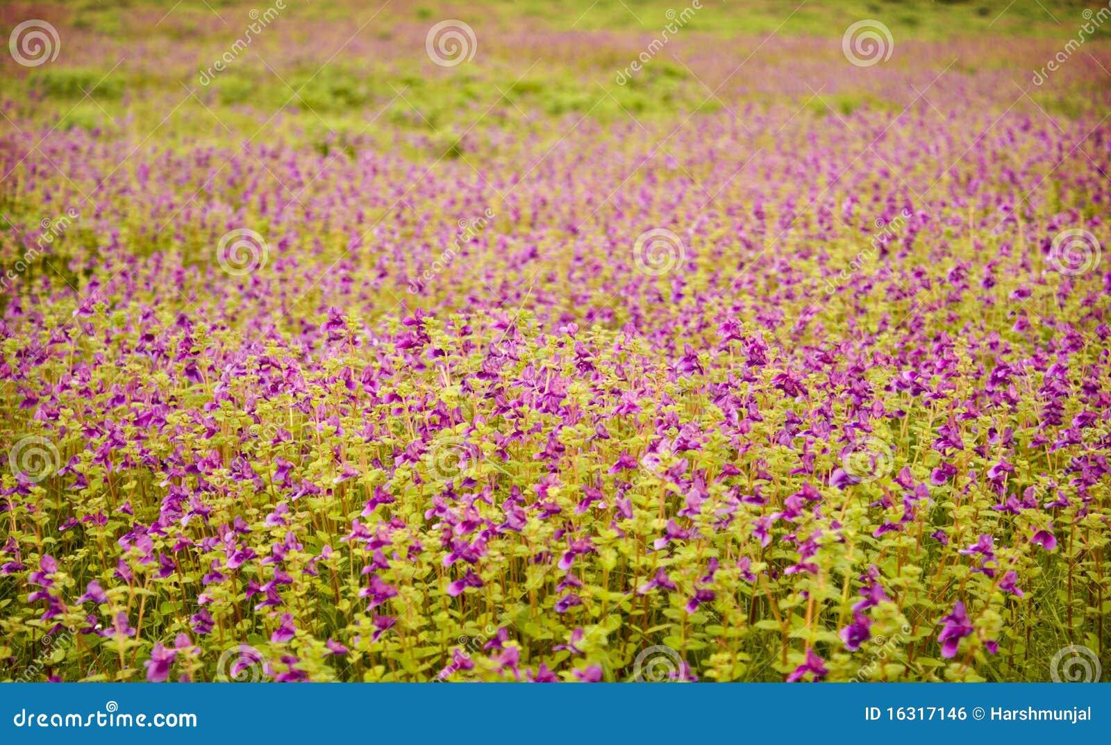 Teppich Der Blumen Lizenzfreies Stockbild  Bild 16317146