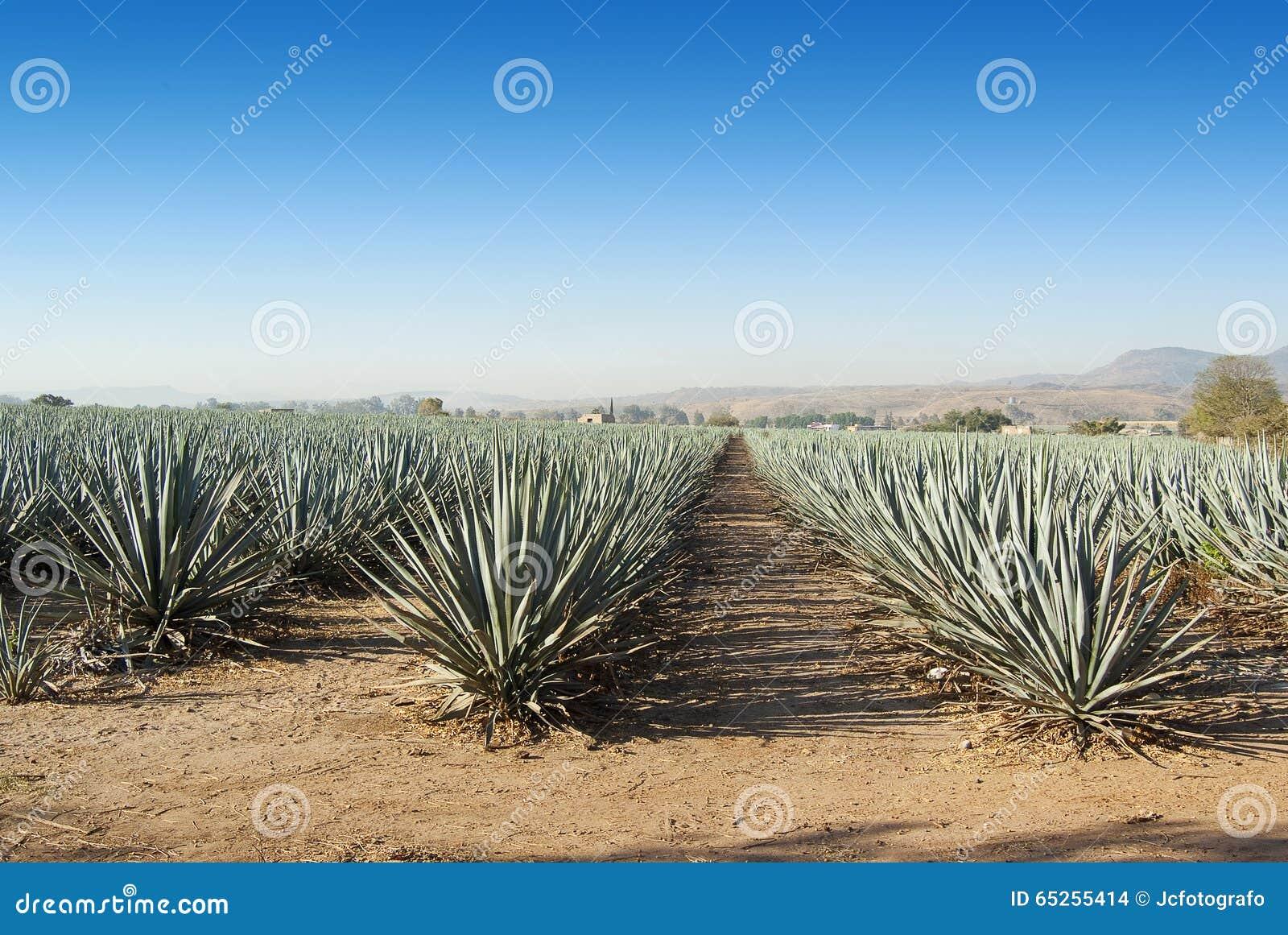 Tequila Mexique de Lanscape