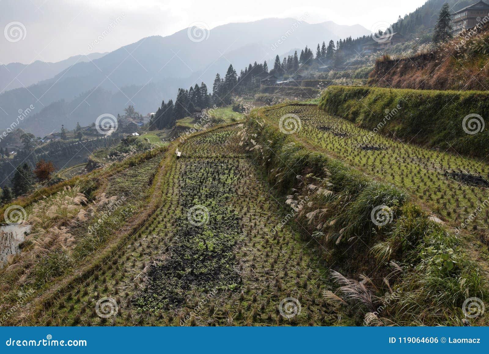 Terassenförmig angelegte Reisfelder hoch in den Bergen von Guizhou-Provinz in China