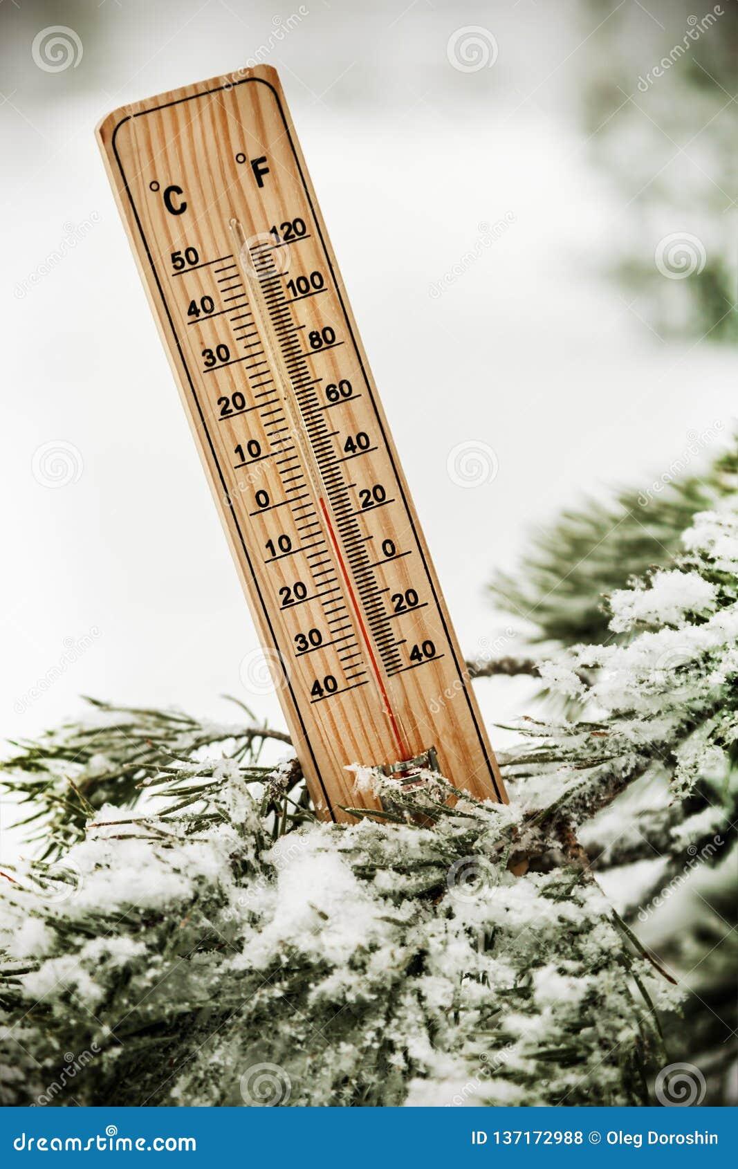 Termômetro com temperaturas abaixo de zero no ramo de uma árvore
