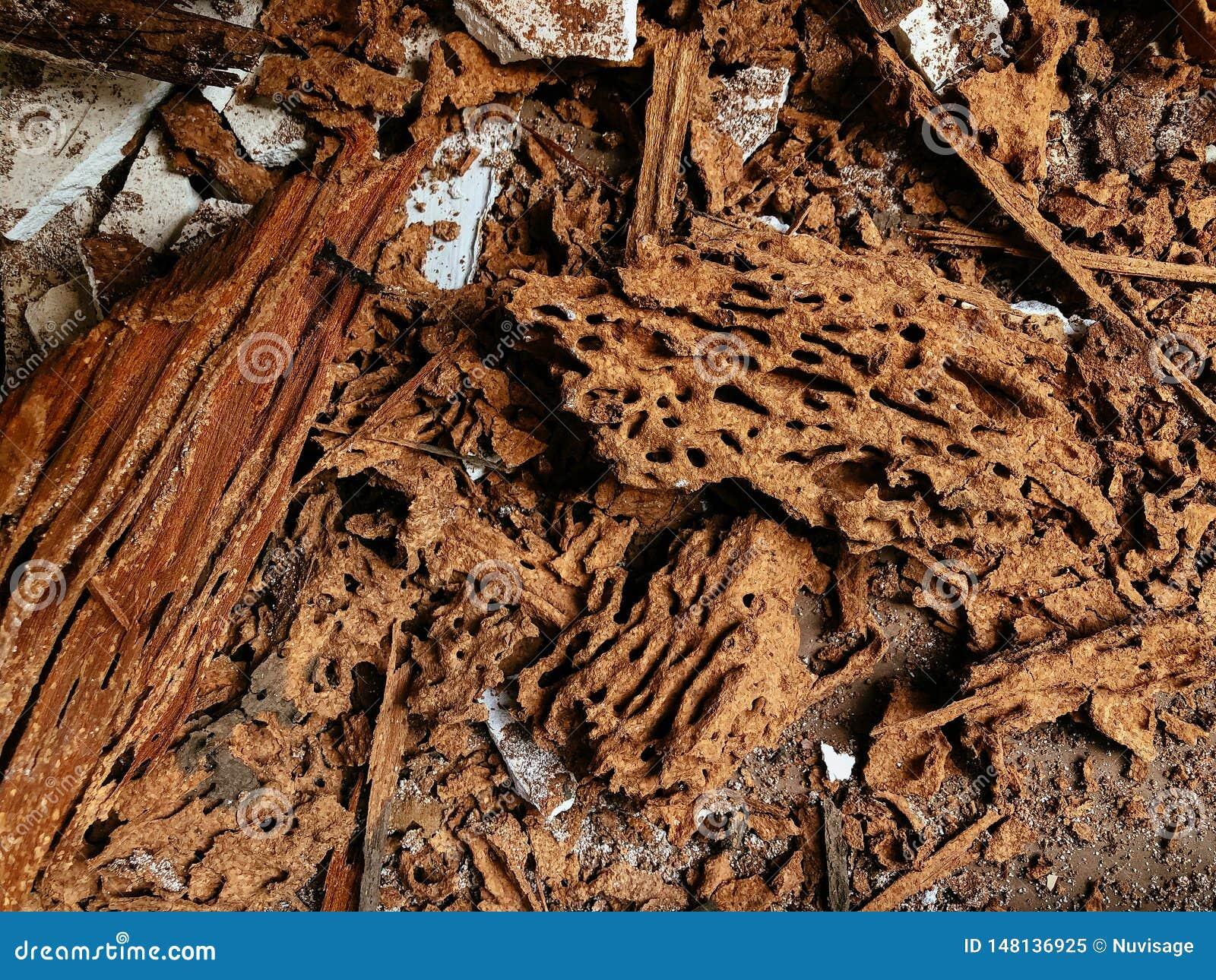 Termite Damaged Wood Pile Close Up Detail Construction Pest Control Problem Stock Image Image Of Destructive Structure 148136925