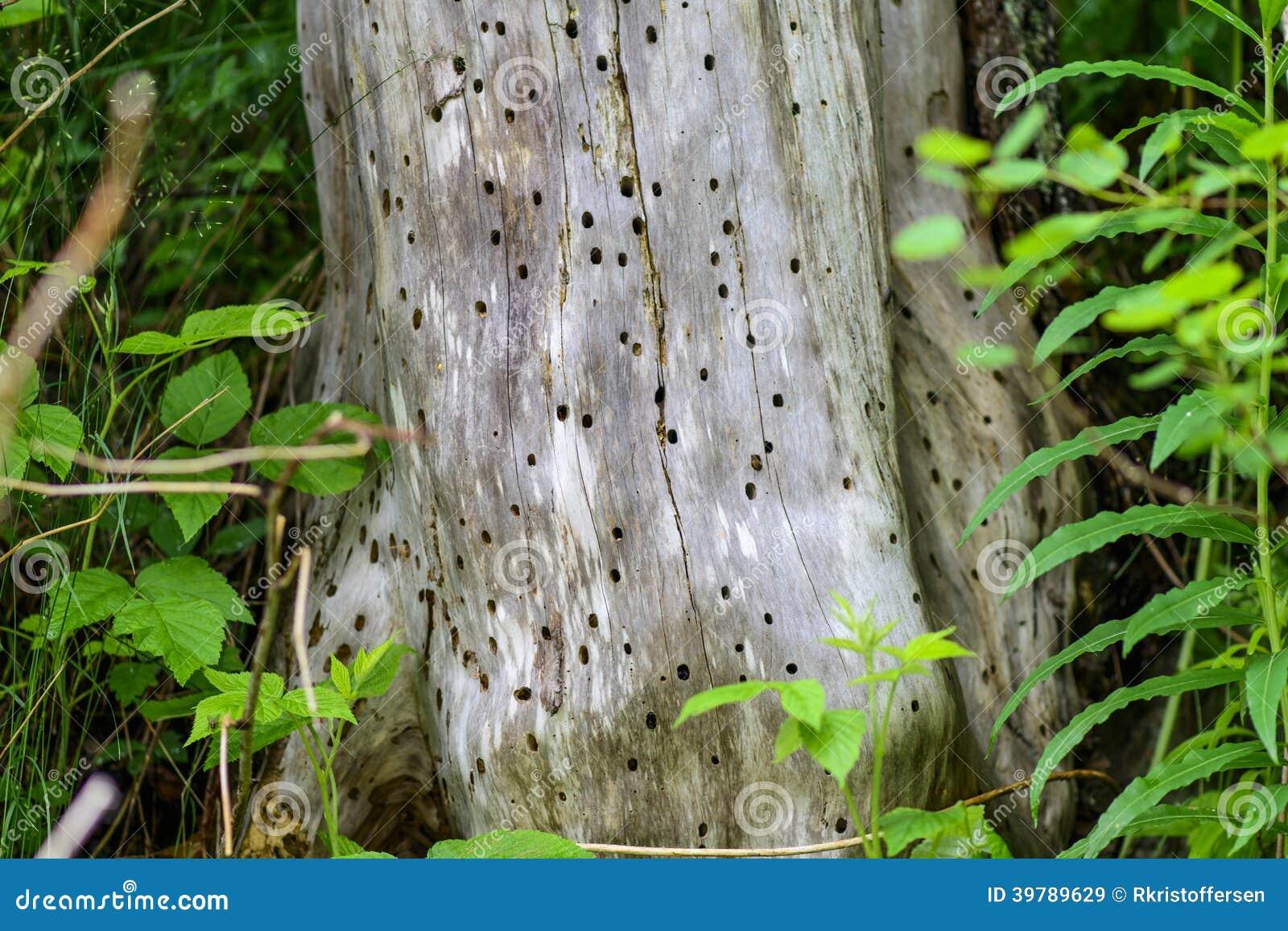 Termite Eaten Tree Stock Photo - Image: 39789629