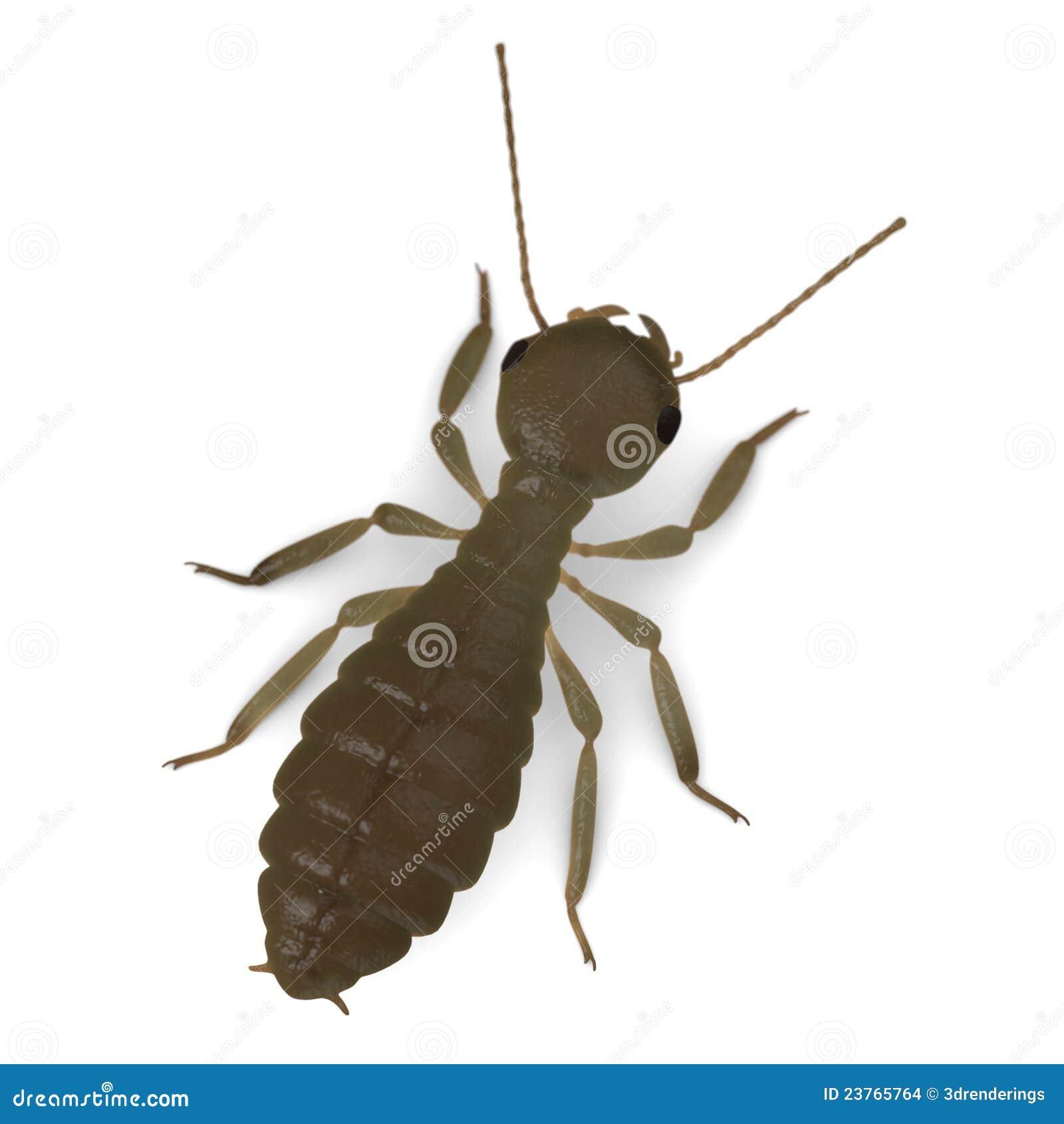Termite worker - photo#24