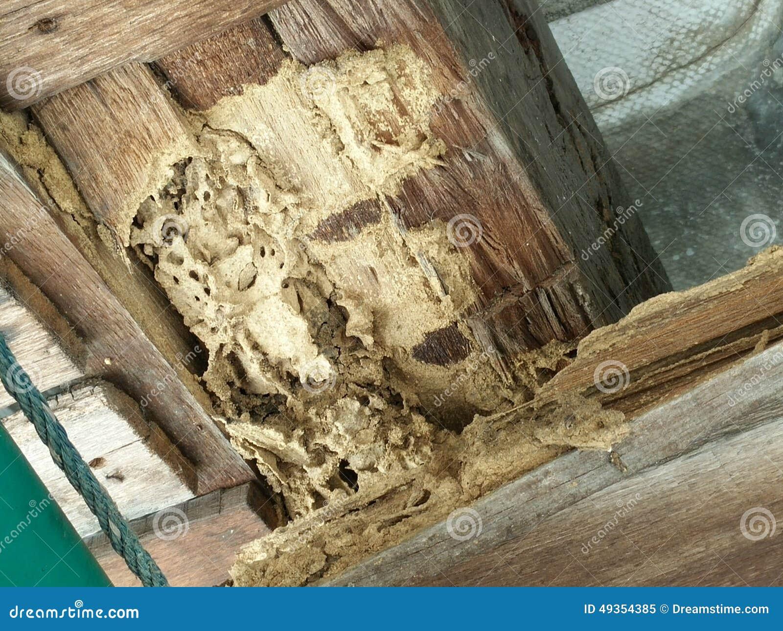 termiten essen holz stockfoto bild 49354385. Black Bedroom Furniture Sets. Home Design Ideas