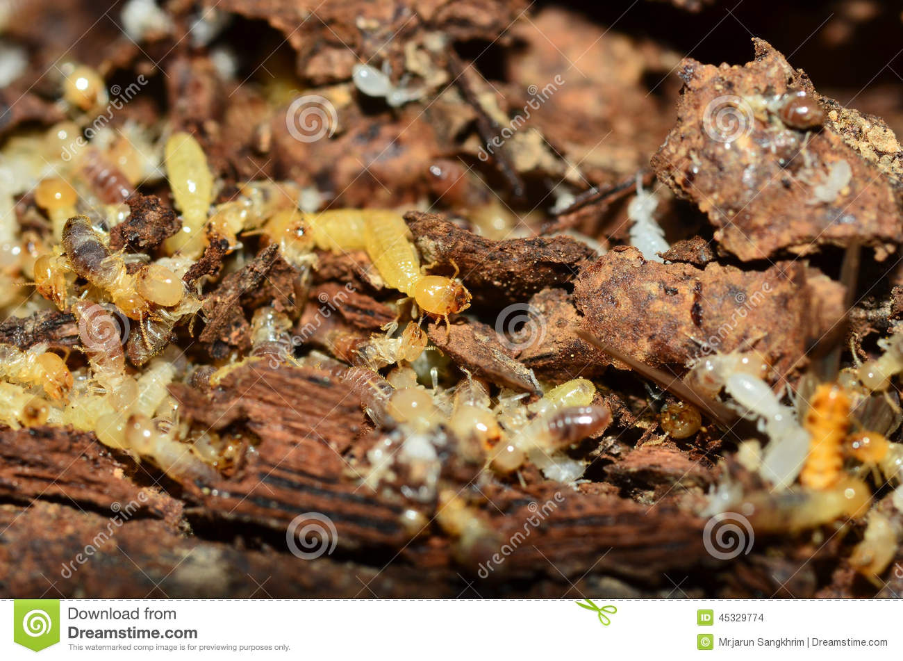 How often should you get your house inspected for termites ... |Termites Eating House