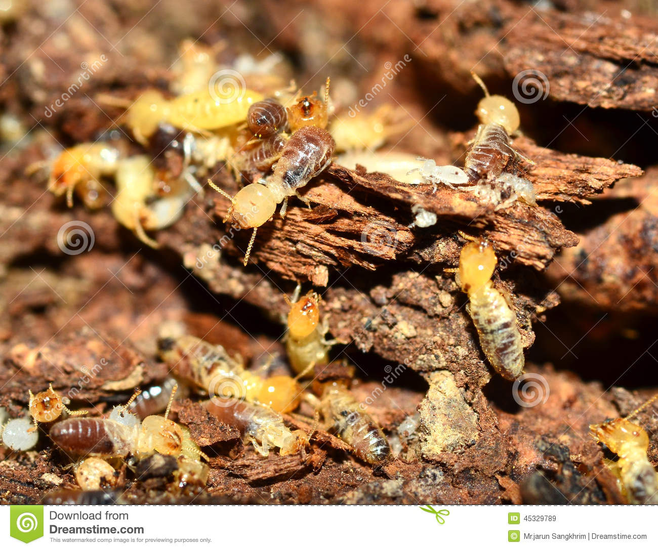Testing for the terrible termite |Termites Eating House