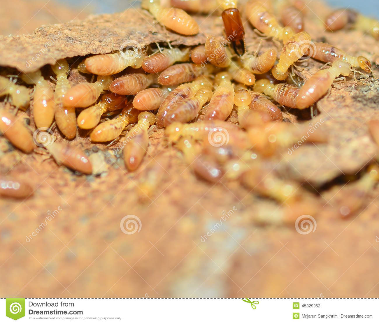 6 Easy Ways To Prevent Termites From Spreading In Your Home |Termites Eating House