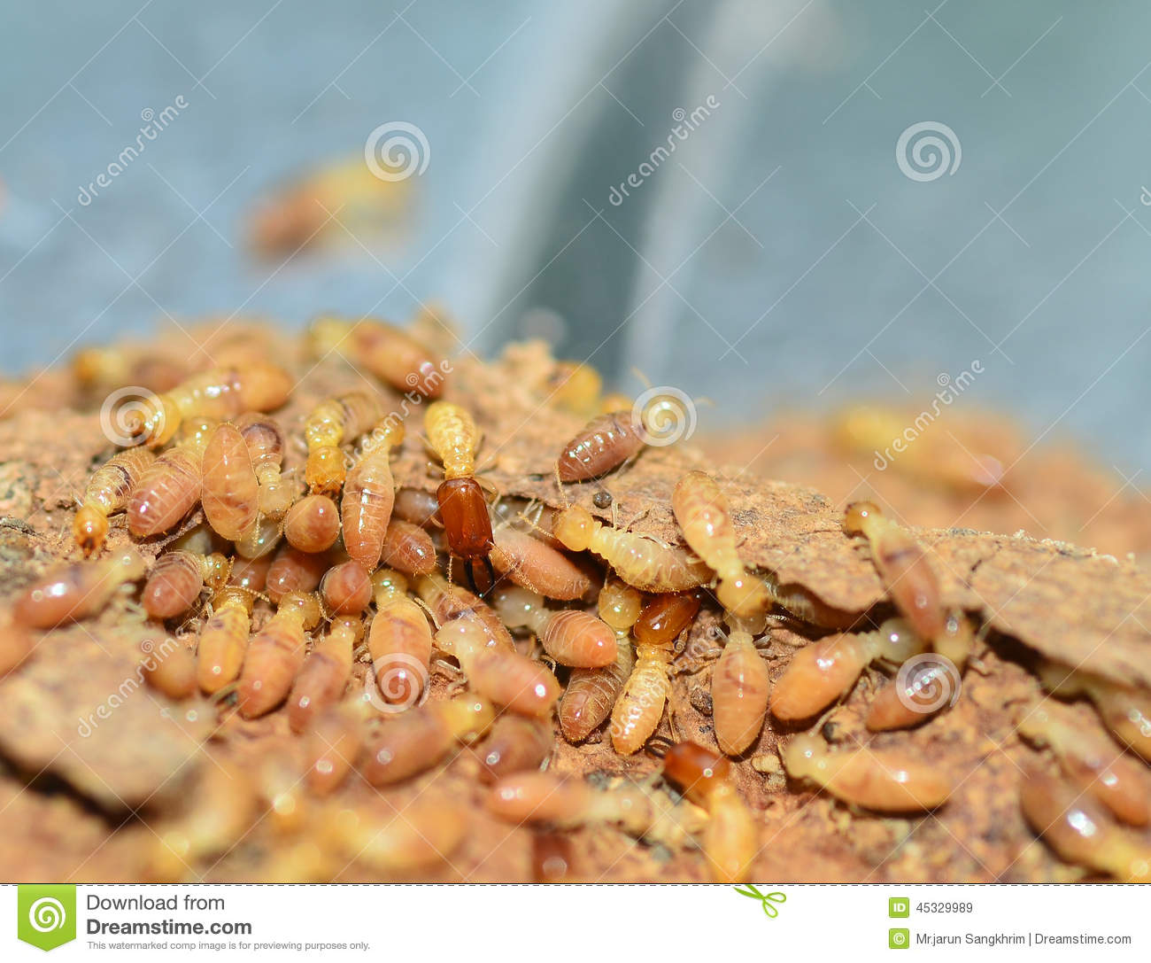 Tiny Desctructors: Termites - What Homeowners Should Know |Termites Eating House