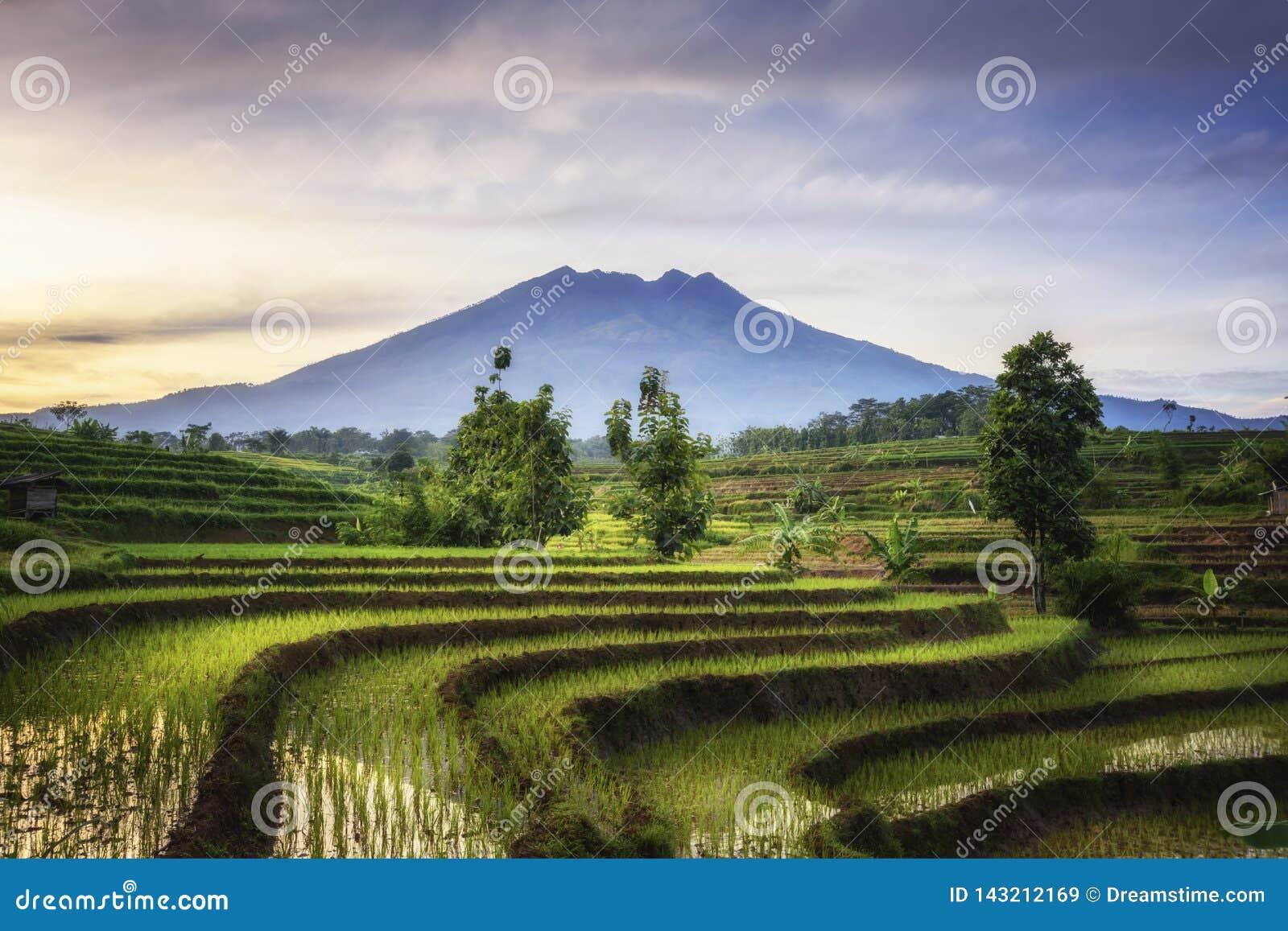 Terraço bonito do arroz em Ngawi Indonésia