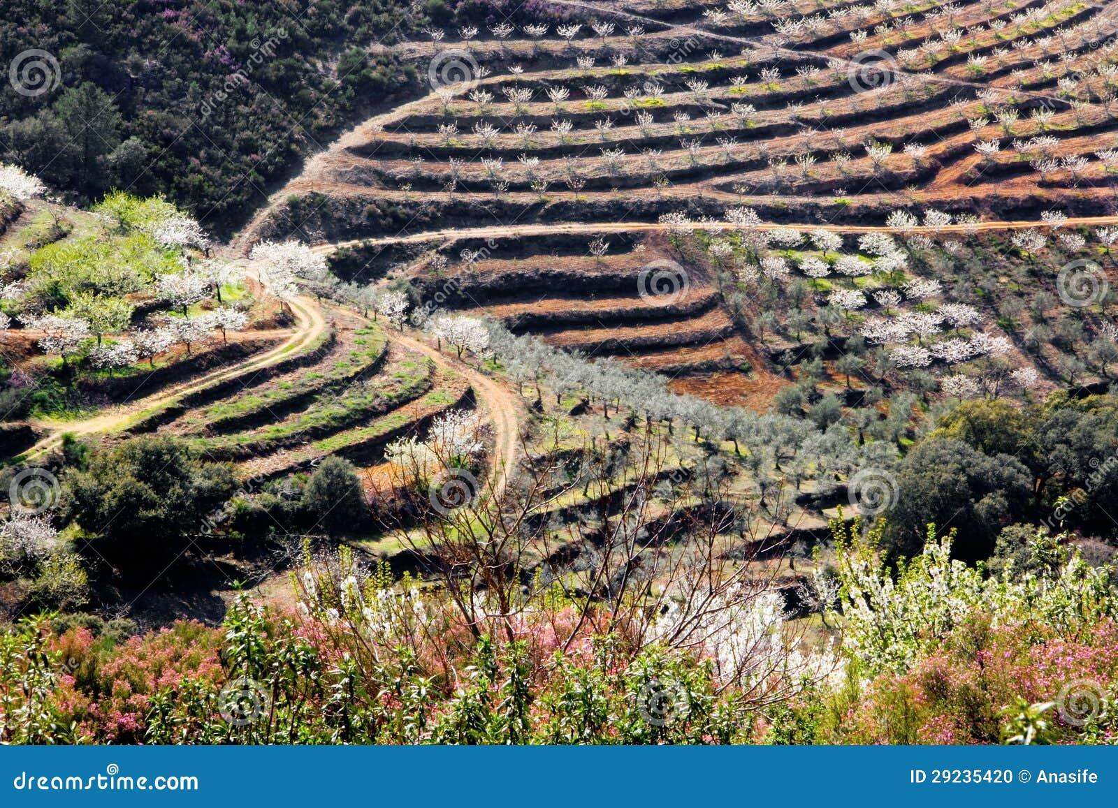 Download Terraços De árvores Das Flores De Cerejeira Foto de Stock - Imagem de verde, paisagem: 29235420