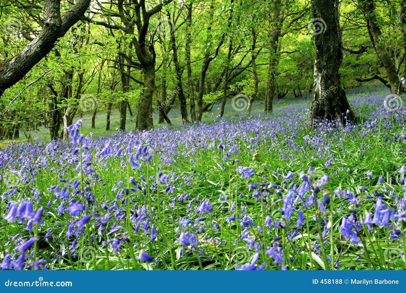 Terra da fantasia do Bluebell