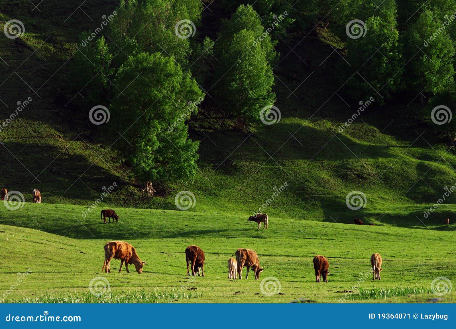 Terra da grama em Xinjiang