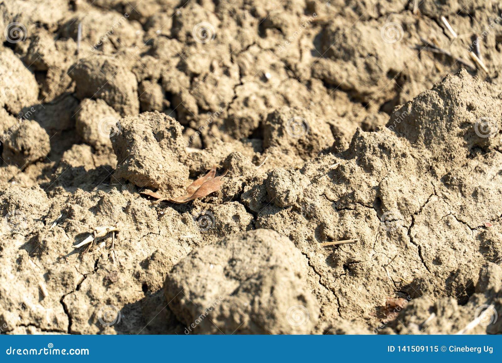 Terra estéril e da seca