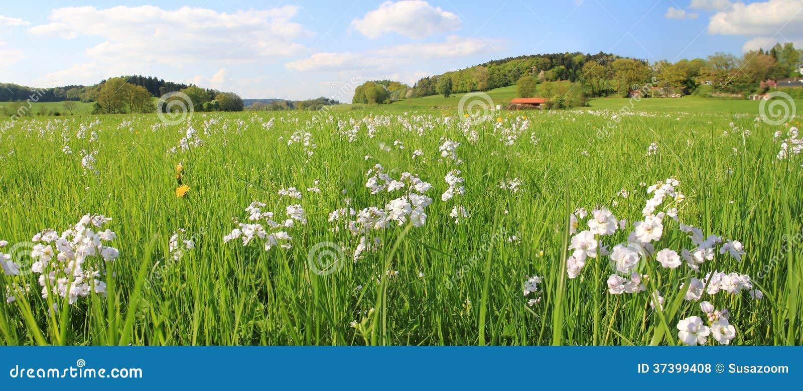 Terra pitoresca do pântano com wildflowers e o céu nebuloso, lan alemão