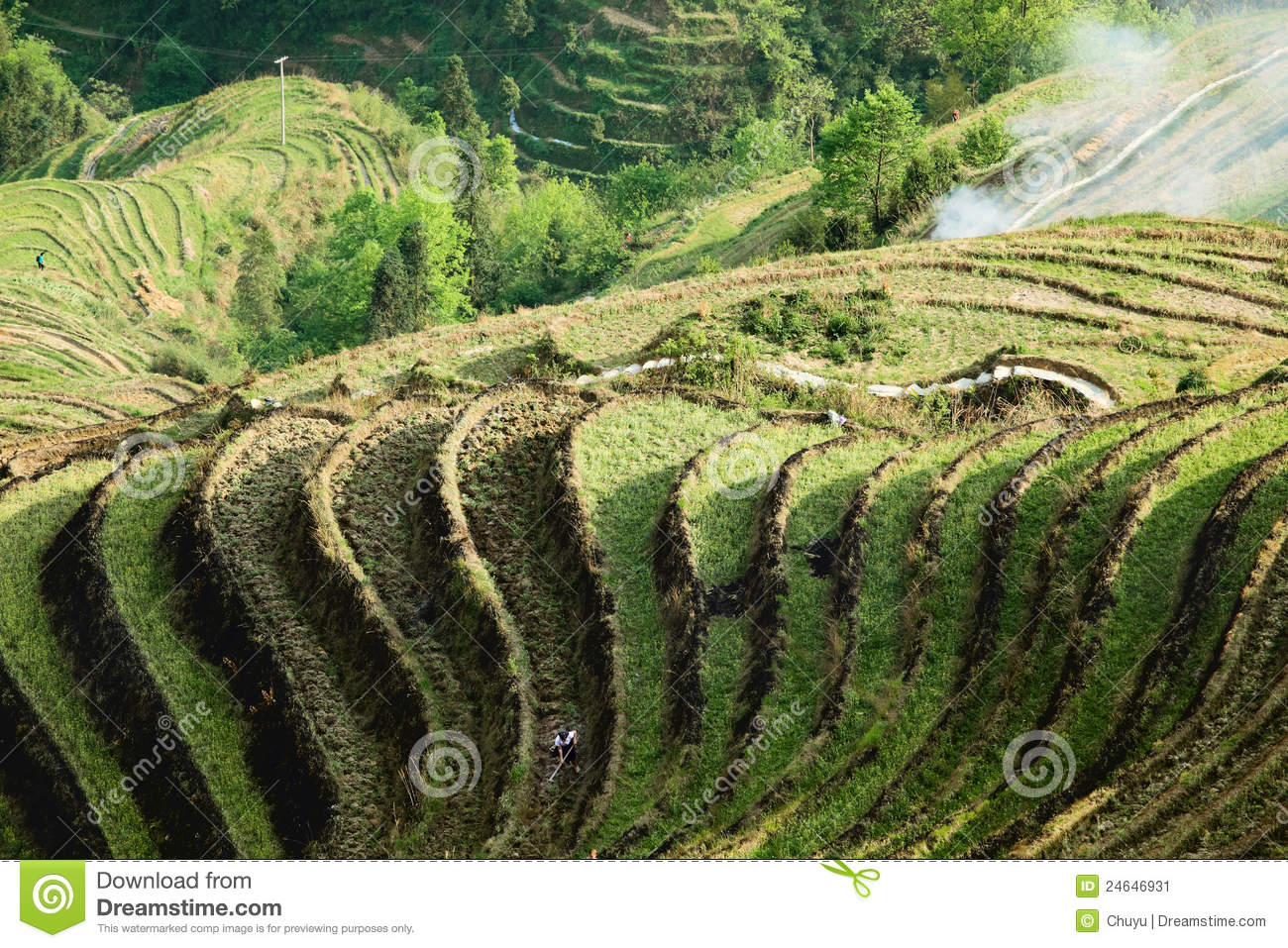 Terrace cultivation stock image image of dusk field for Terrace cultivation