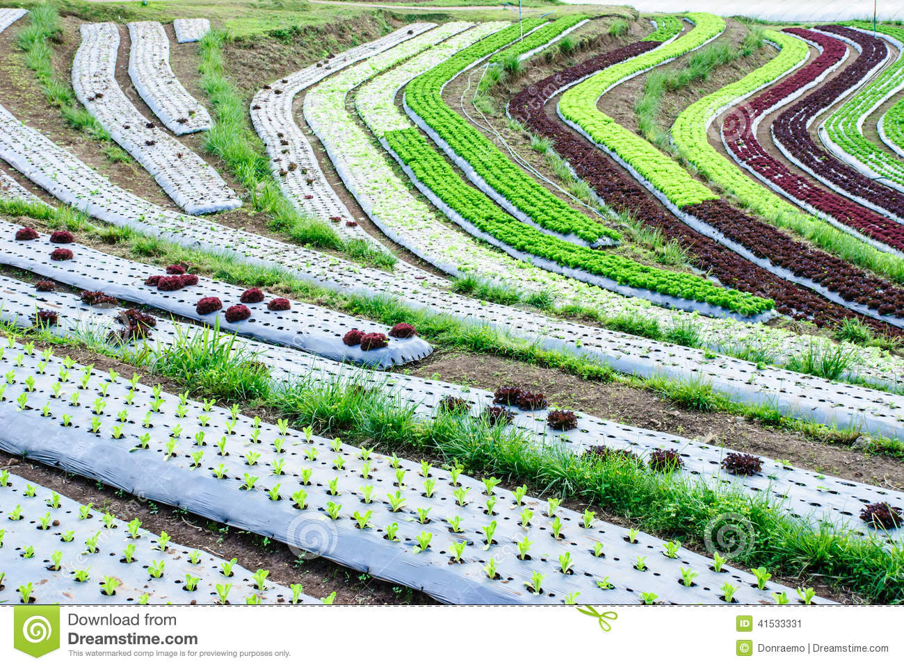 Terrace farming stock image image of hills agriculture for Terrace farming model