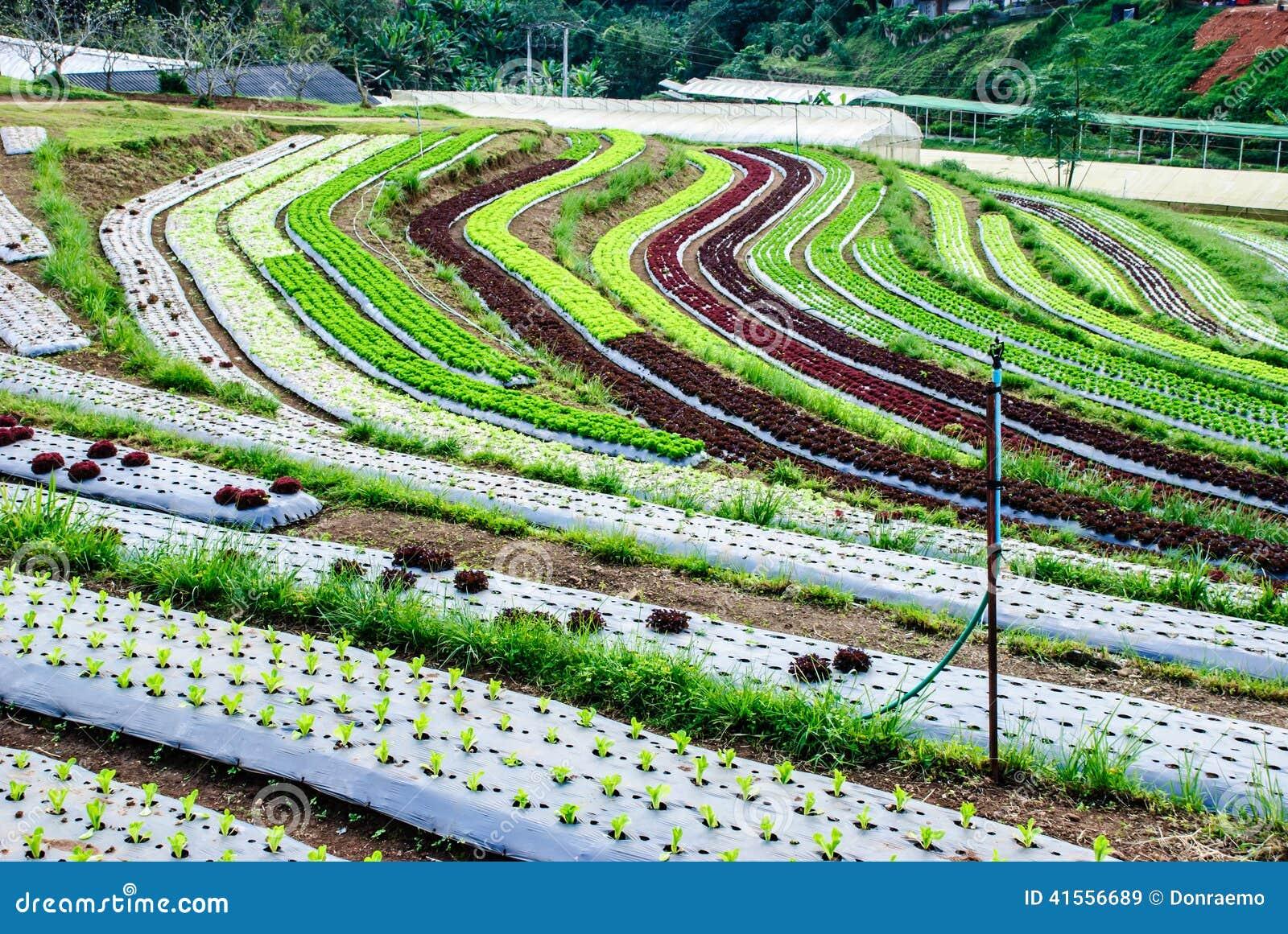 Terrace farming stock photo image 41556689 for Terrace farming