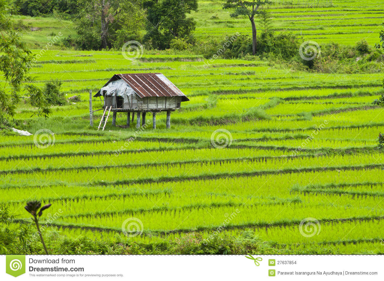 terrace rice fields in thailand stock images image farm animal clipart for kids farm animals clipart chart