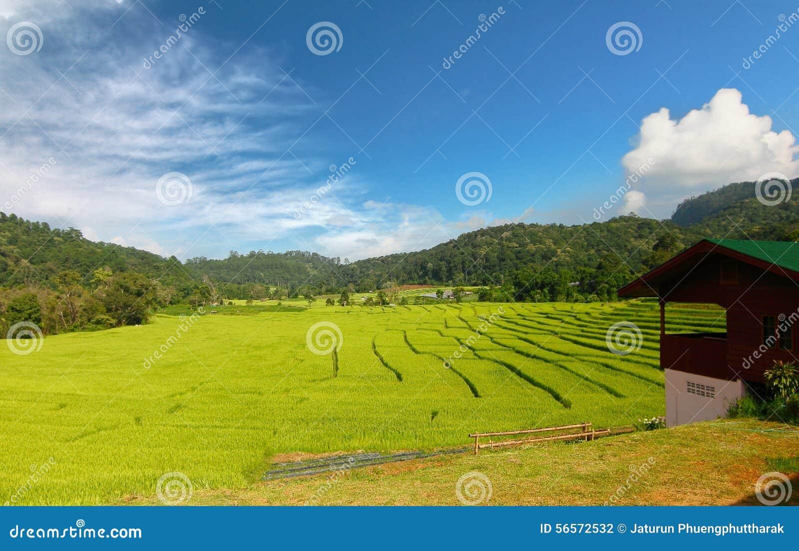 Download Terraced τομέας ρυζιού σε Chiangmai, Ταϊλάνδη Στοκ Εικόνες - εικόνα από ορυζώνας, ορόσημο: 56572532