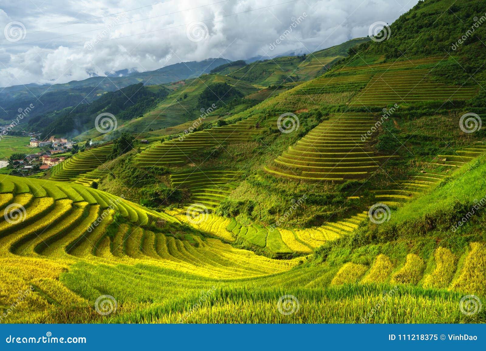 Terraced τομέας ρυζιού στην εποχή συγκομιδών στη MU Cang Chai, Βιετνάμ