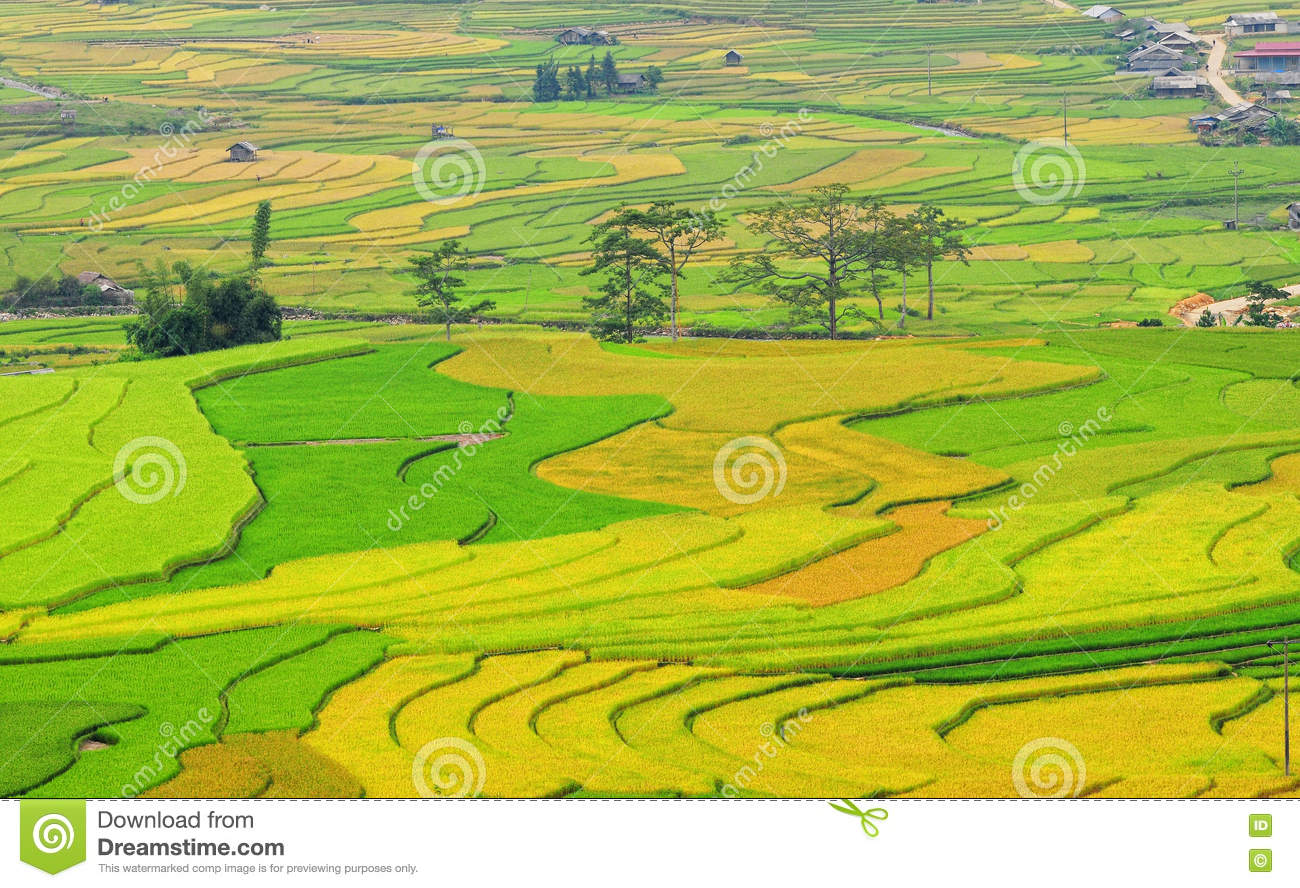 rice in vietnam 3vietnam's rice policy, f i ally a second-best solution is for vietnam to negotiate such preferential trade agree-ments with key rice-importing nations.