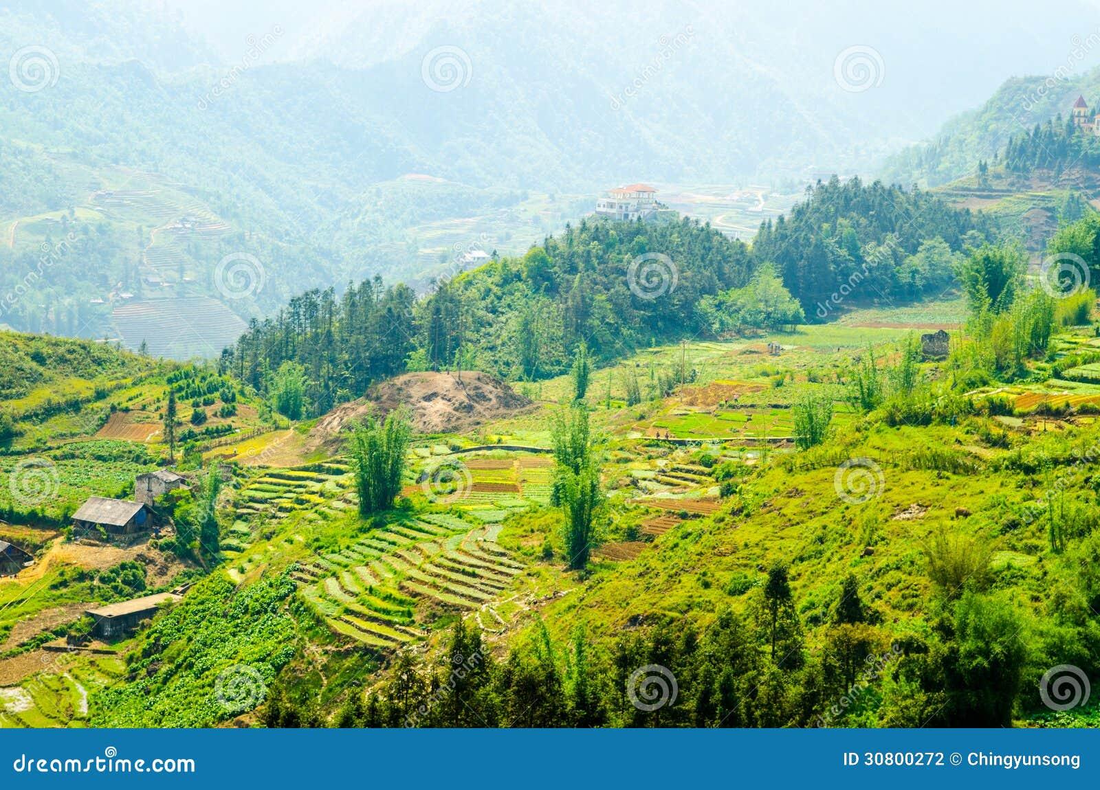 Terraced Rice Fields In Vietnam. Southeast Asia Beauty