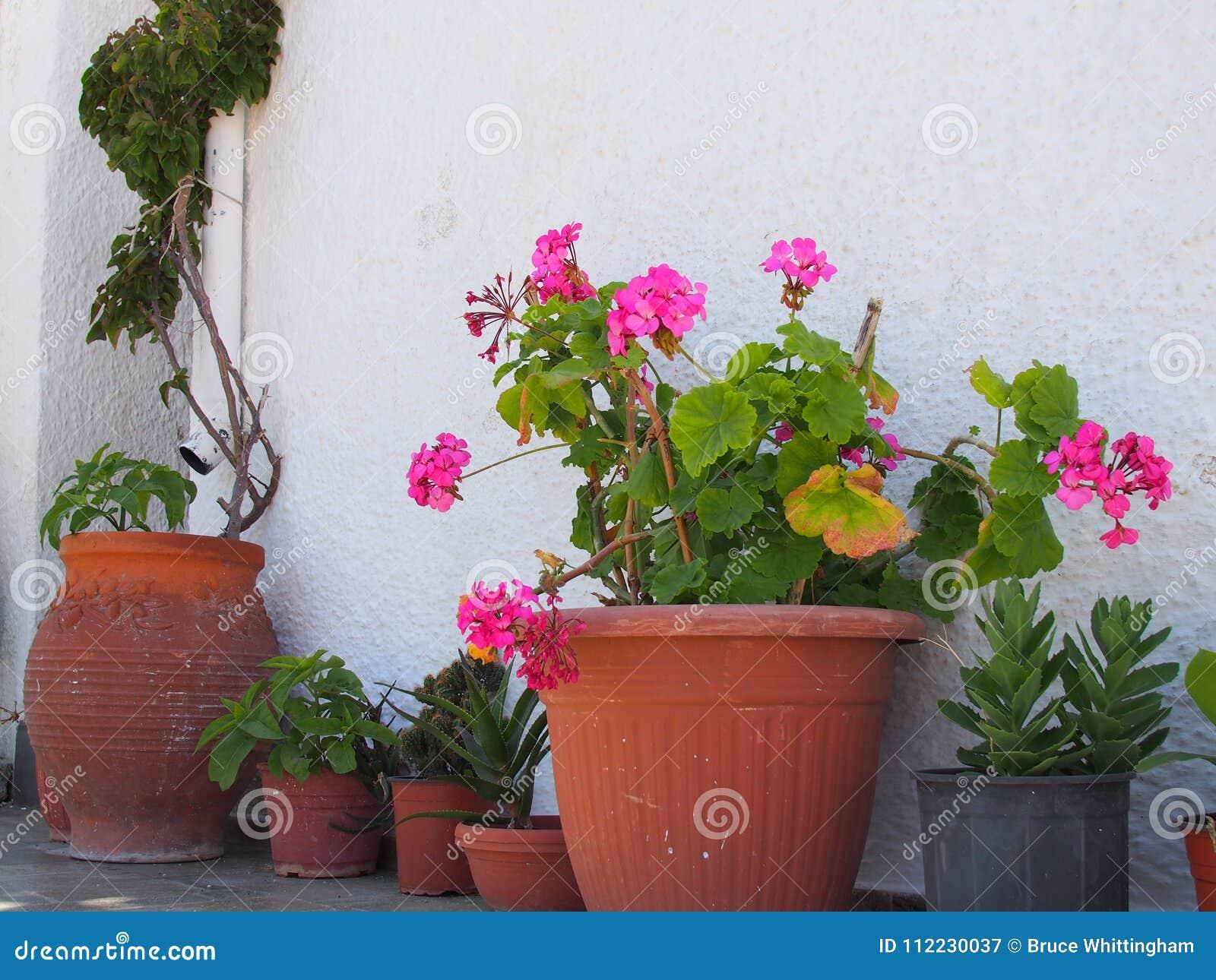 Terracotta flower pots outside white greek island house stock image green pot plants and pink flowers in terracotta pots outside a white painted greek island house greece mightylinksfo