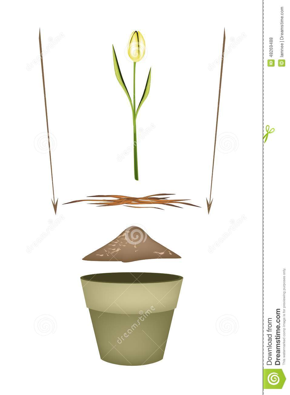 Terracotta Flower Pots With Soil And Yellow Tulip Stock Vector