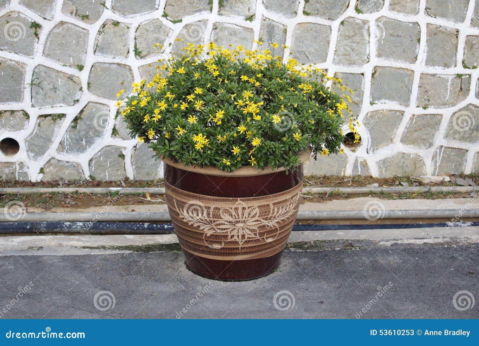 Terracottapot van gele madeliefjes