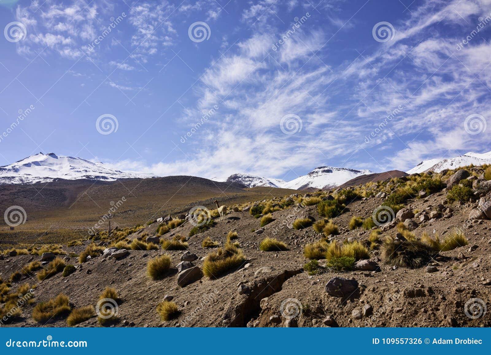 Terrain aride de désert d Atacama et crêtes des Andes couvertes par neige