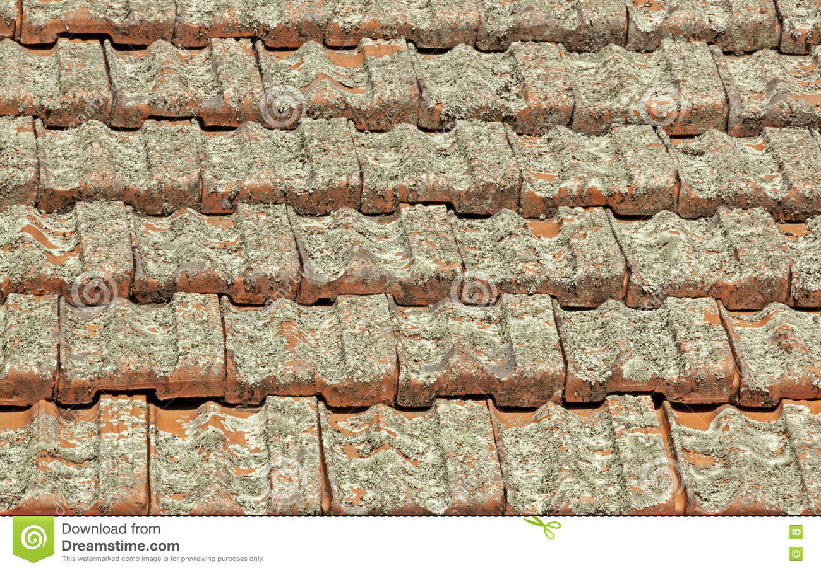 Terrakotta-Dachplatten bedeckt in Lichen Fungus