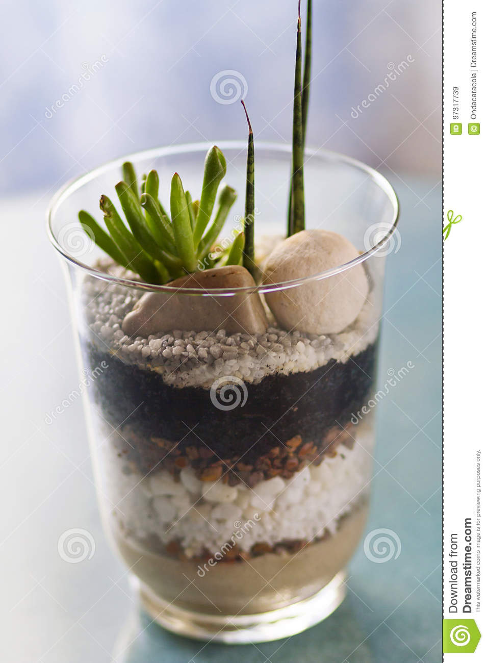 Terrarium Stock Image Image Of Concept Greenhouse Growth 97317739