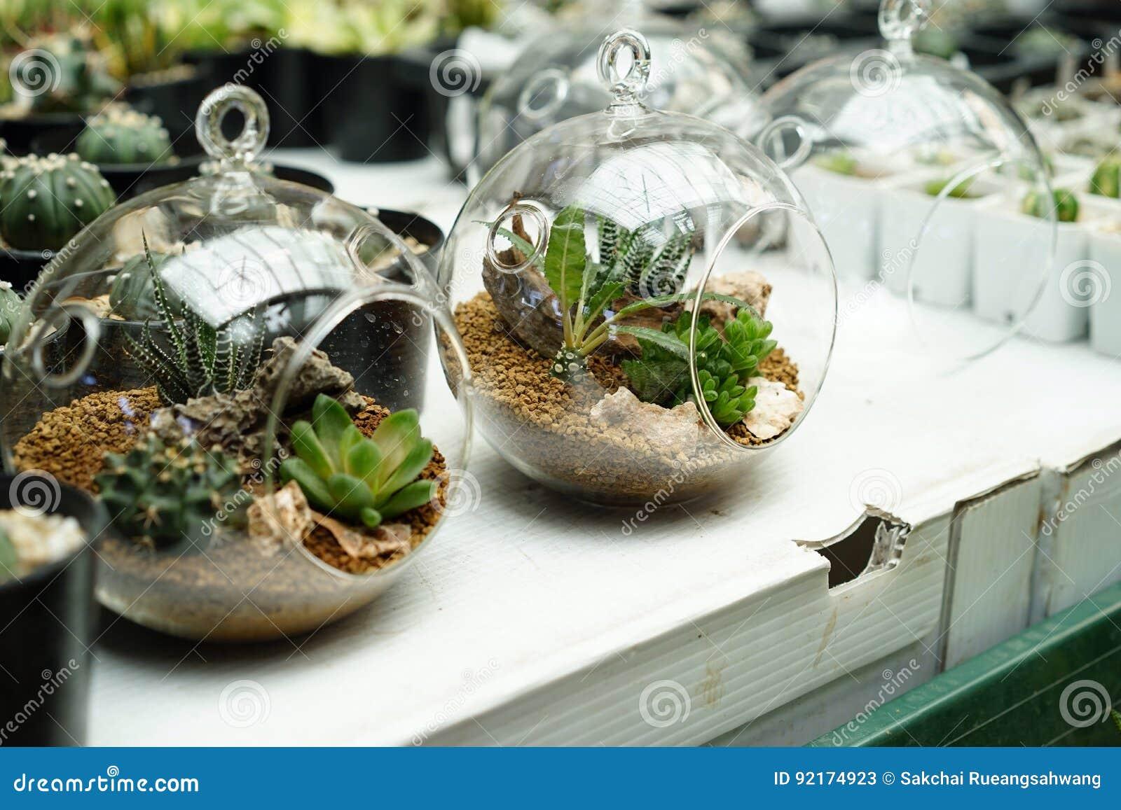 Terrarium Plants Stock Image Image Of Cane Cacti Environment