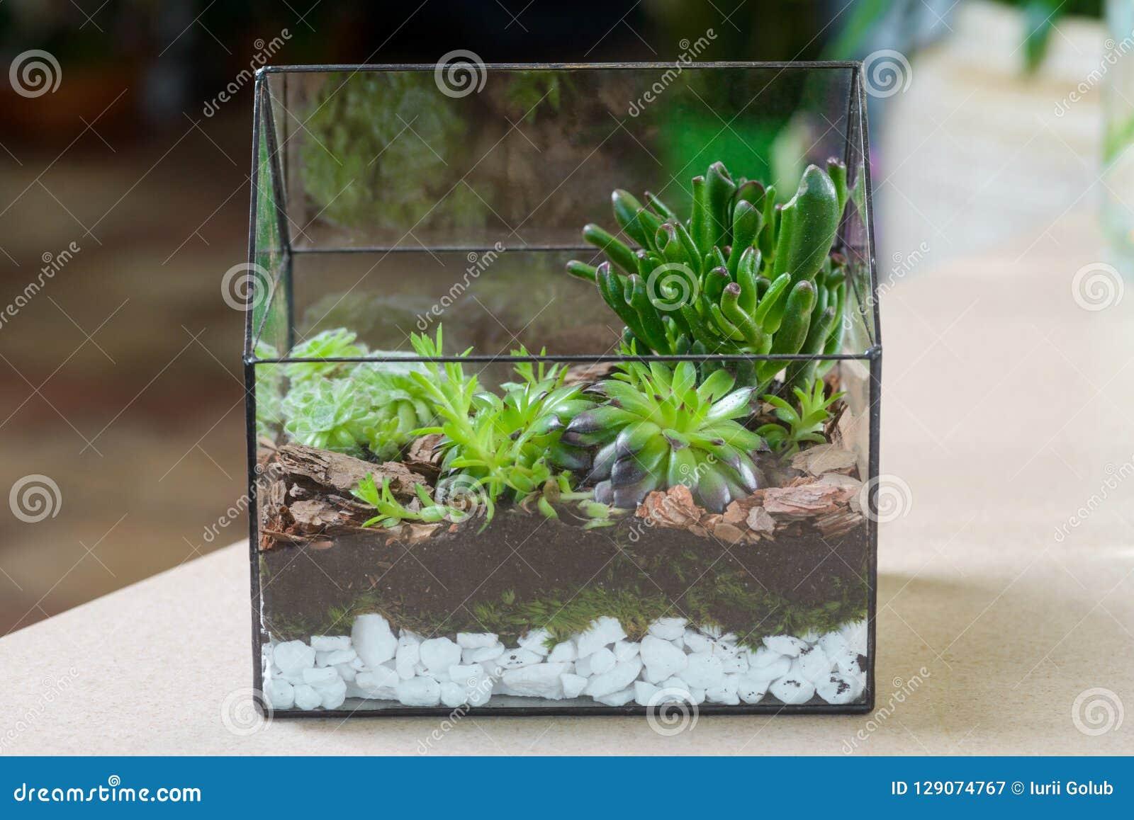 Terrarium With Succulent Plants Stock Image Image Of Focus Choice 129074767