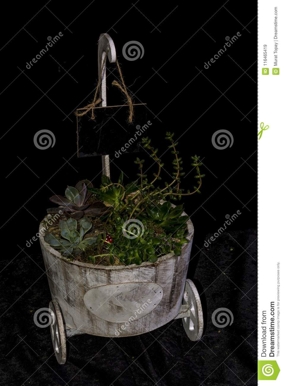Tropical Gardens Created In Terrarium Glass Containers Stock Image