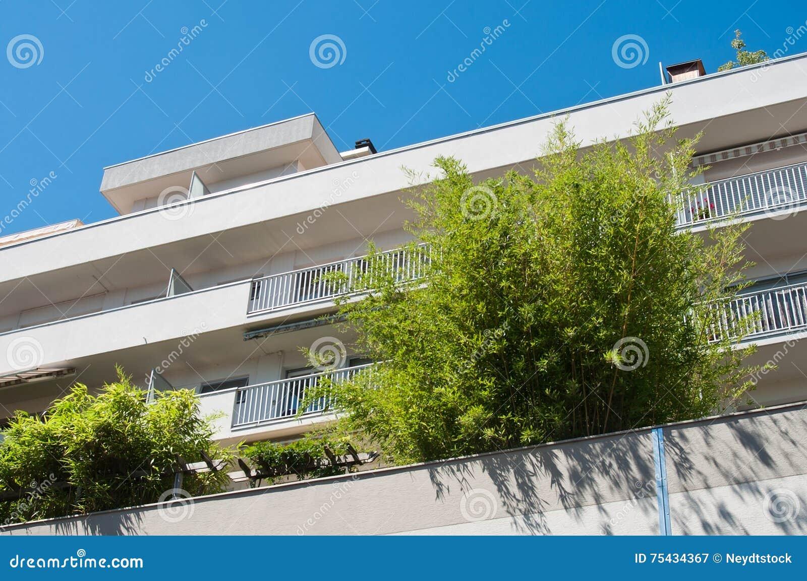 terrasse avec les arbres en bambou sur le fond de ciel bleu image