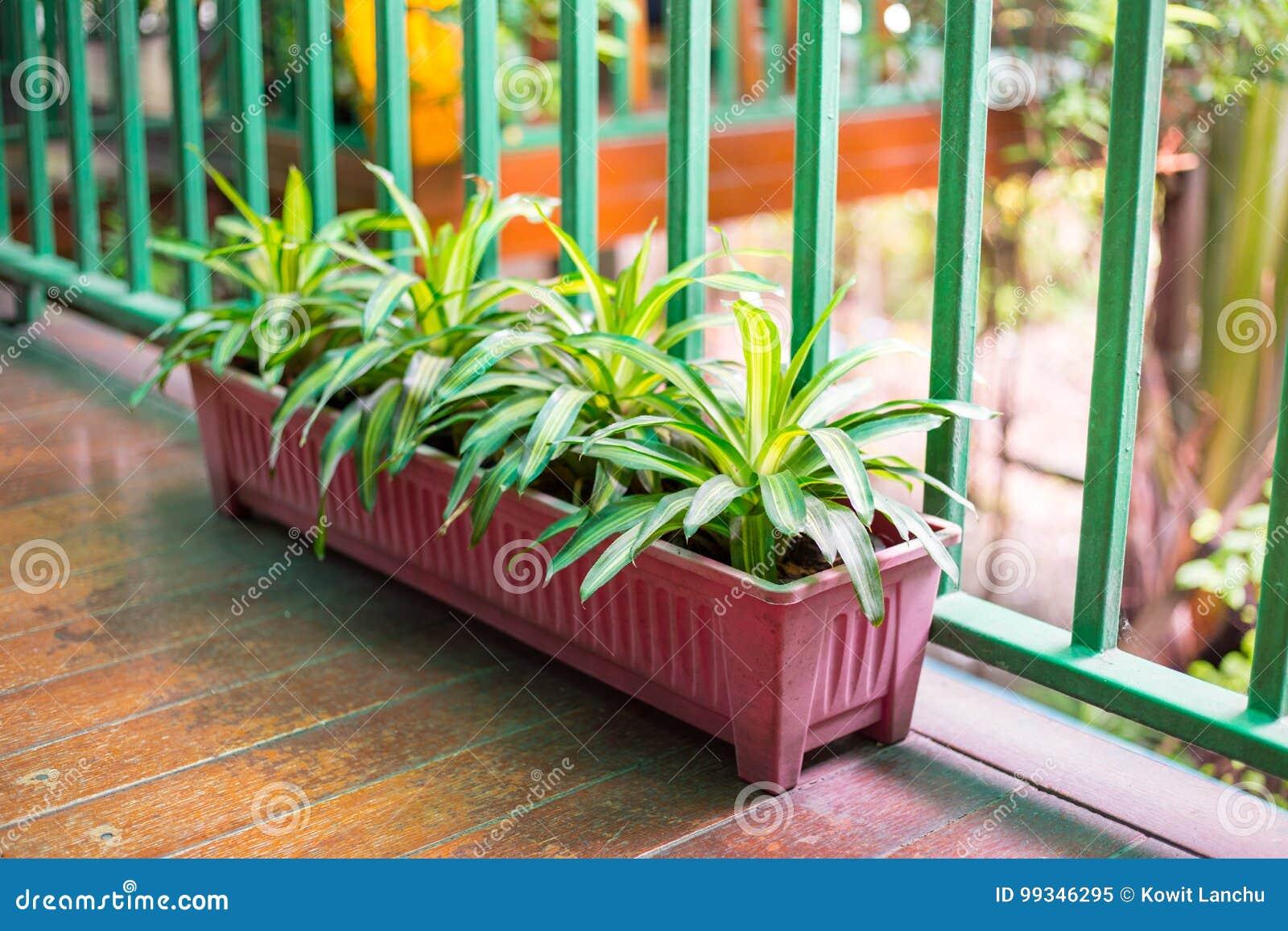 Arbre En Pot Terrasse terrasse dans la maison avec peu d'arbre dans le pot image