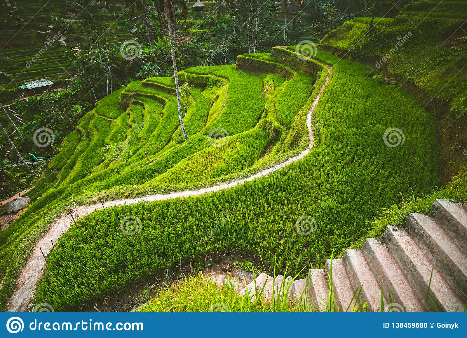 Terrasse de riz de Tegalalang dans l Ubud, Bali
